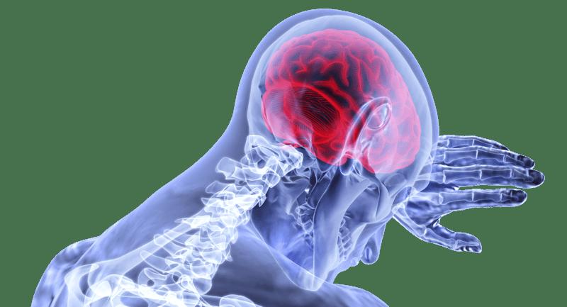 Le CBD et le cerveau