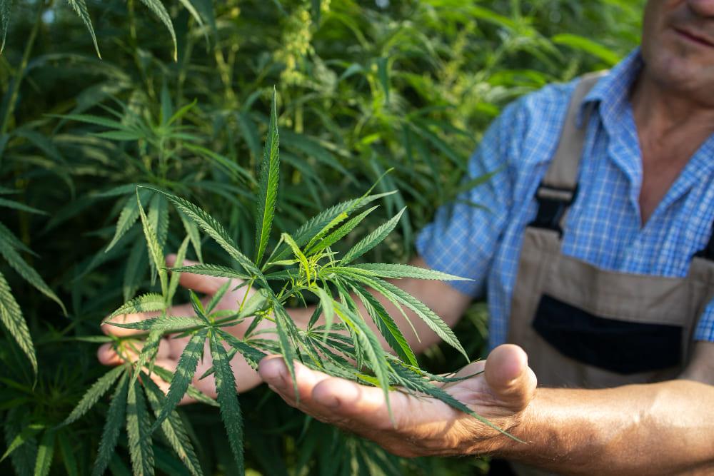 cultiver une plante